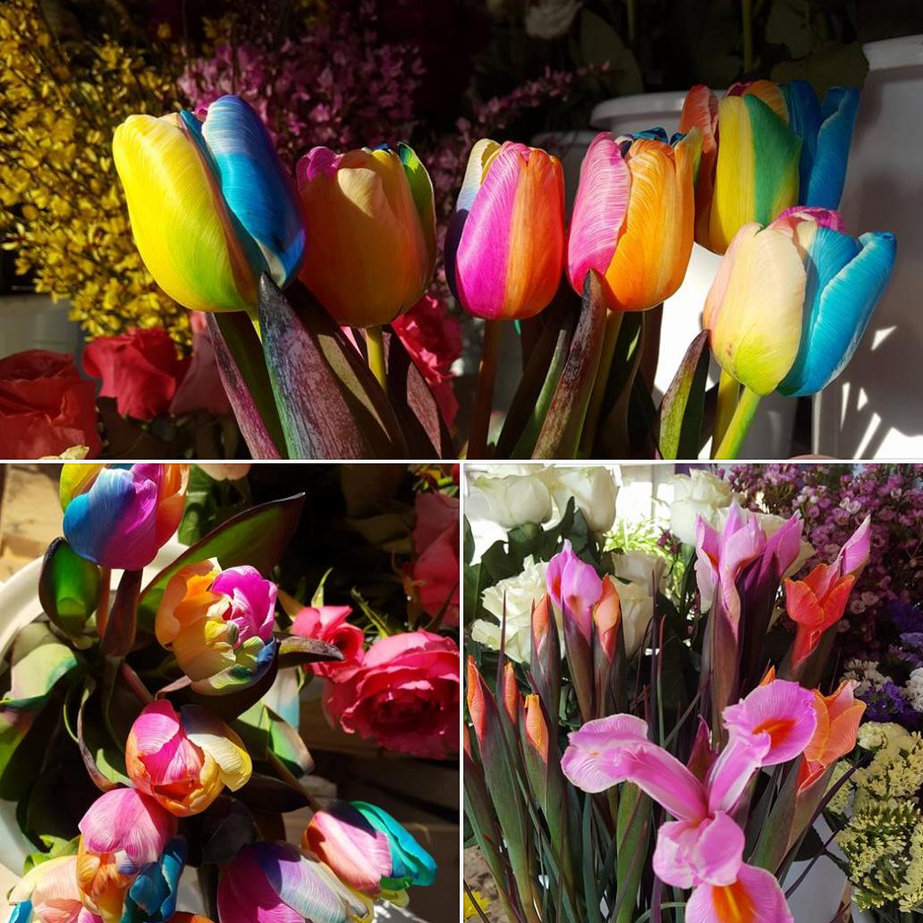 Tulipani Rainbow e lilium rosa